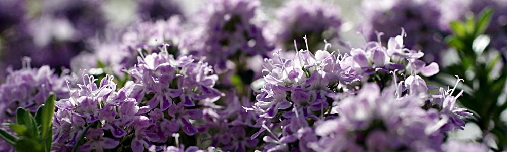 Blumen bei einer Beerdigung