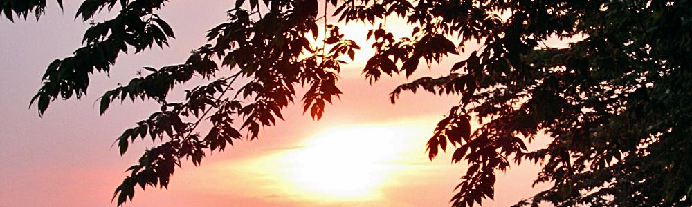 Zweige vor dem Sonnenuntergang